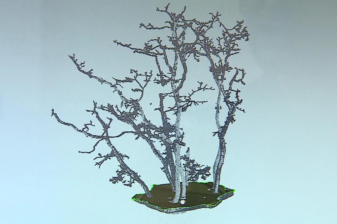 Stromy si ve skupině vzájemně pomáhají