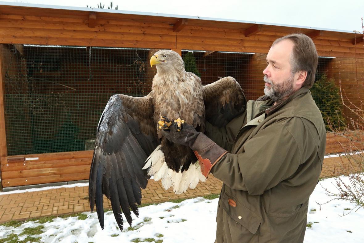 Vypuštění orla mořského Viktora do volné přírody
