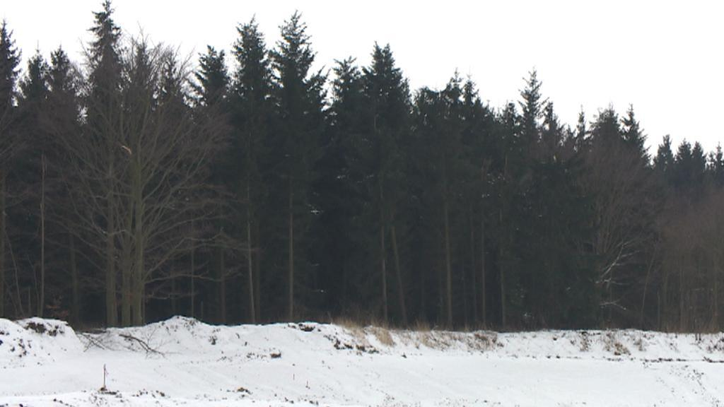 Les na trase budoucí silnice R6