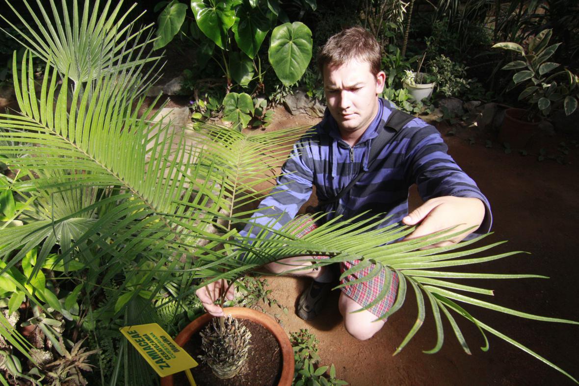 Sbírka cykasů v hodonínském skleníku