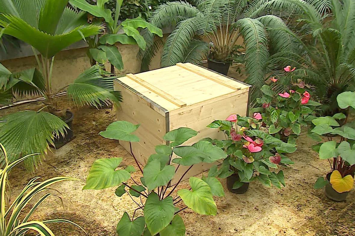 Pracovníci zahrady rostlinu každý rok od semínka pěstují