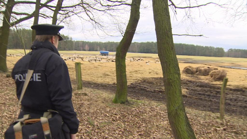 Nový úhyn zvířat na farmě vyšetřovala dnes policie a veterináři