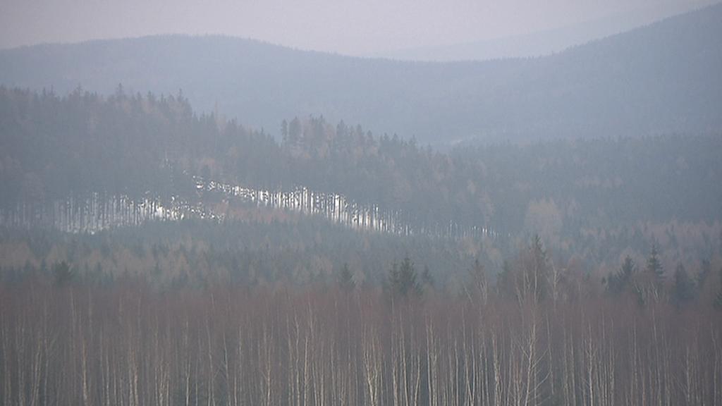 Lesy v Brdech