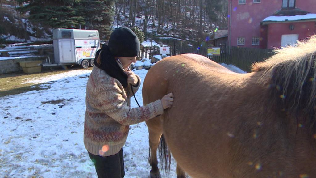 Veterinářka vyšetřuje koně