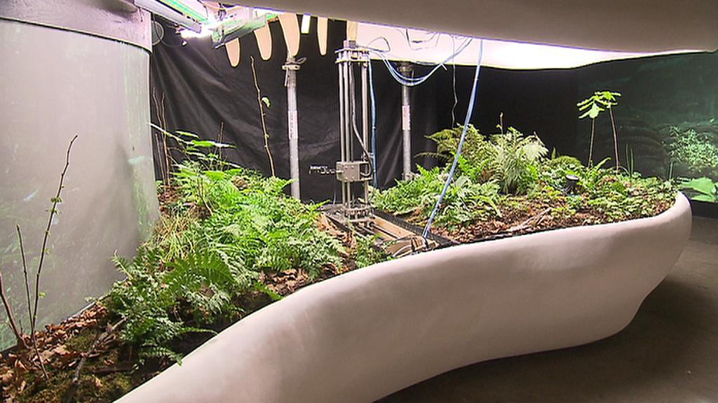 Rostliny pěstované na EXPO