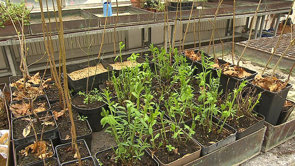 Rostliny pro EXPO
