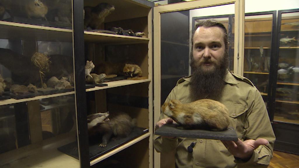 Zoolog Josef Hotový s vycpaným křečkem polním