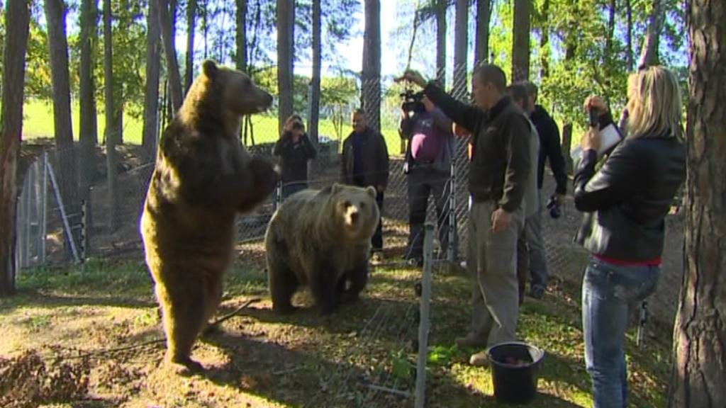 Medvědi v táborské zoo
