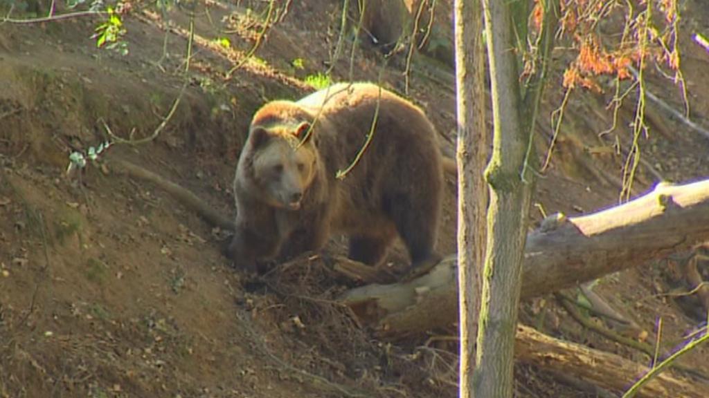 Medvěd v táborské zoo