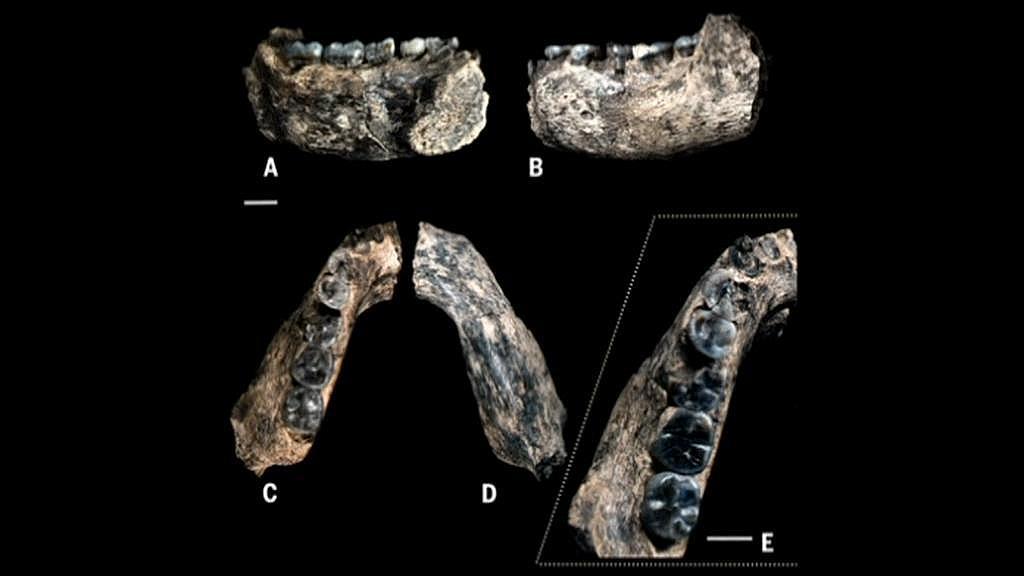 Polovina levé spodní čelisti nalezená paleontology v Etiopii