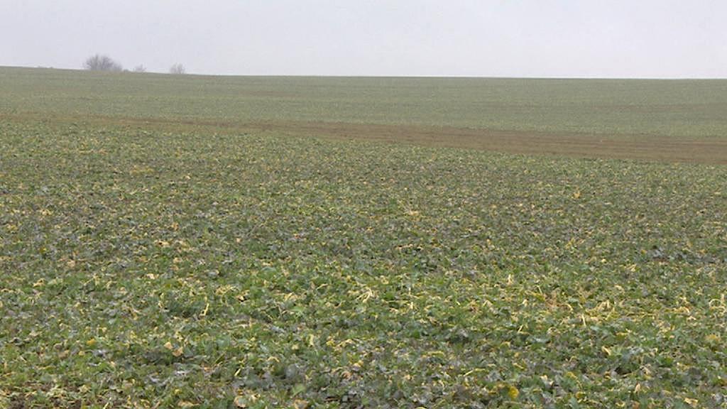 ZD Předhradí bude pole, která nejsou jejich, splácet do roku 2036