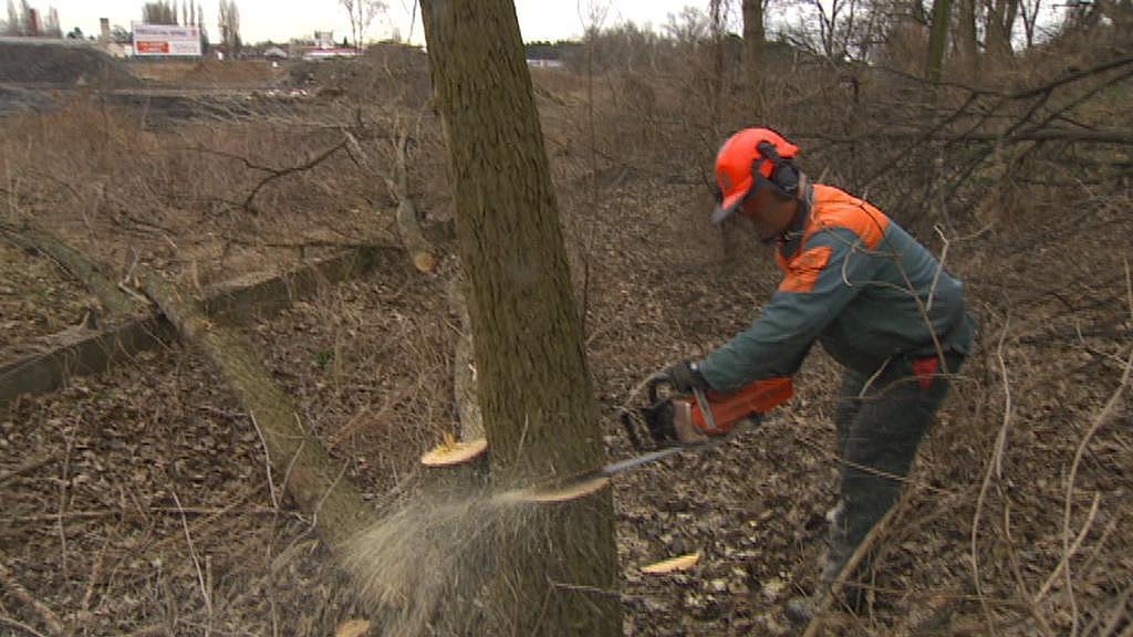 Vedle silnice už se kácejí stromy