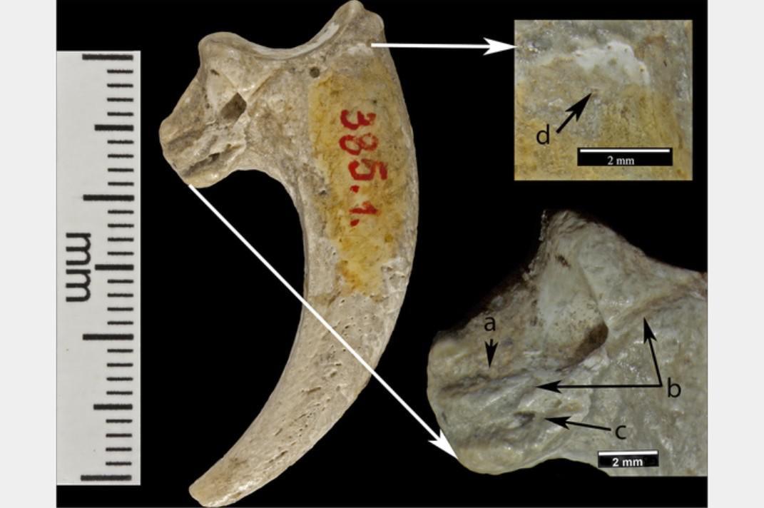 V Chorvatsku našli nejstarší šperky