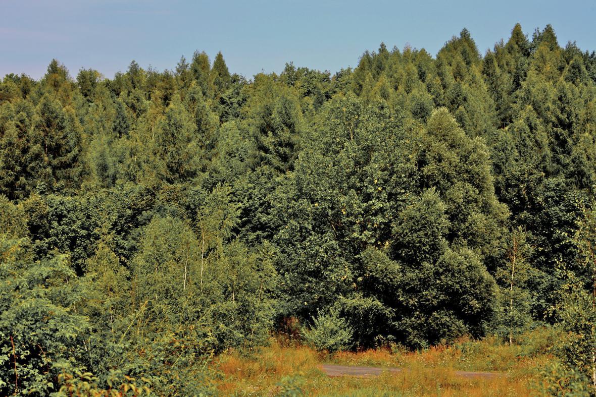 Fotografie z roku 2000 - smíšený les na výsypce