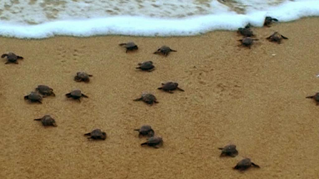 Malé karety na pláži Al Mansúrí