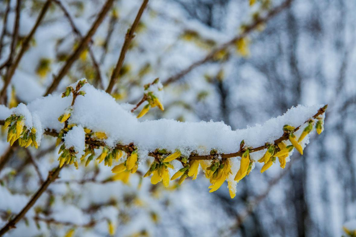 Velký sněhový příděl na sklonku března v Černovicích u Chomutova