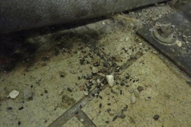 SZPI našla U Dvou koček v Praze myší trus