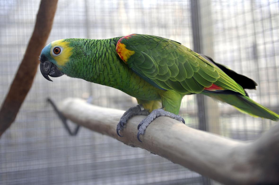 Papouška pes nesežral, zjistila pojišťovna