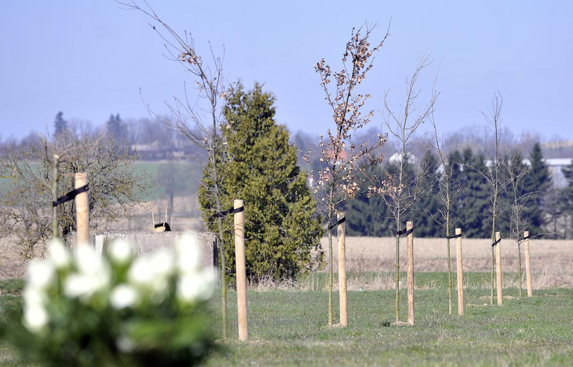 Čerstvá dubová alej nese jméno Petra Vejvody