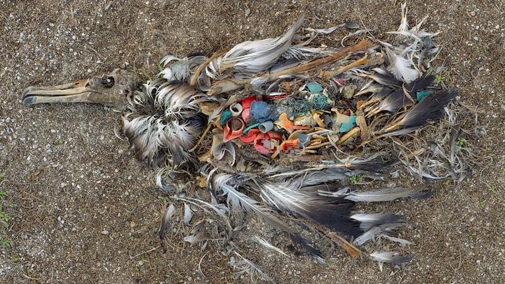 Co zbylo z útrob uhynulého ptáka