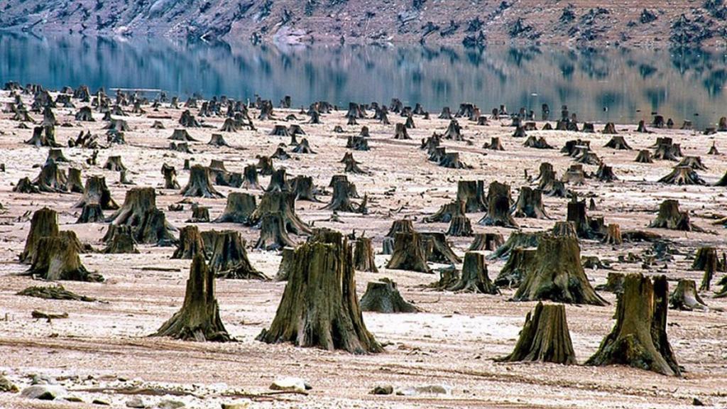 Národní park Willamette v Oregonu - 99 procent lesa vykáceno