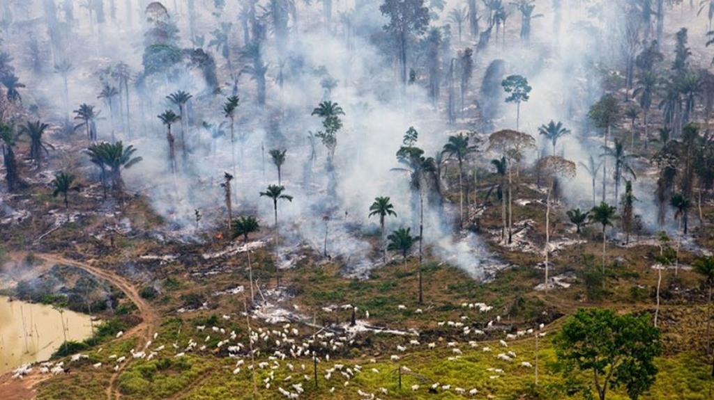 Úbytek brazilského pralesa v Amazonii