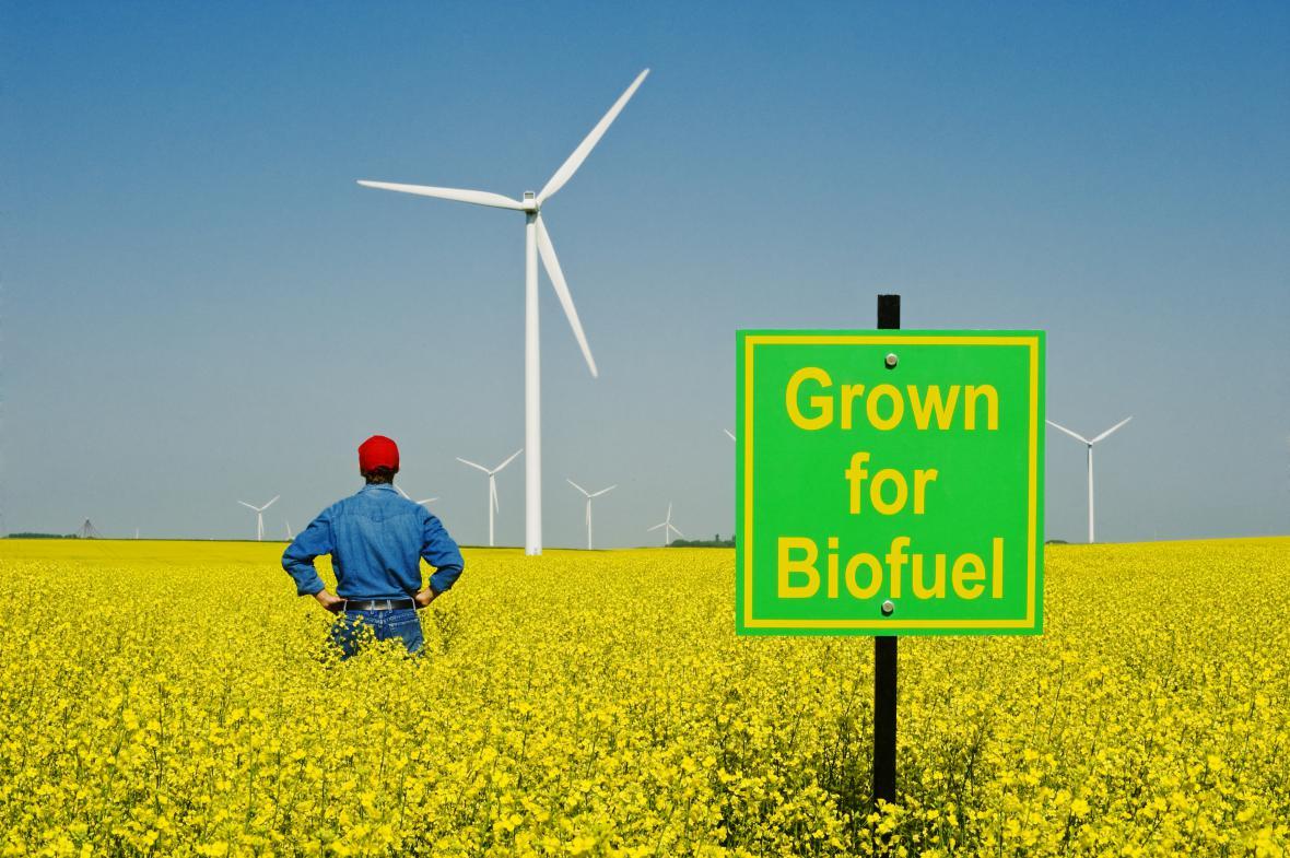 Pole biopaliva