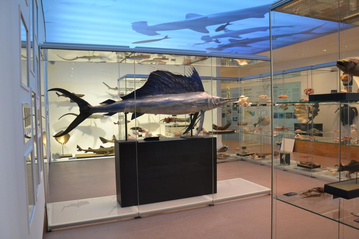 Archa Noemova v Národním muzeu