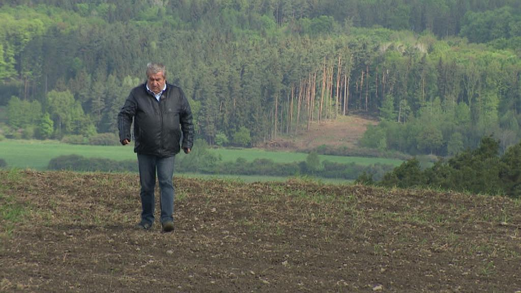Škodu 25 000 Kč za sebou nechala na poli divoká prasata
