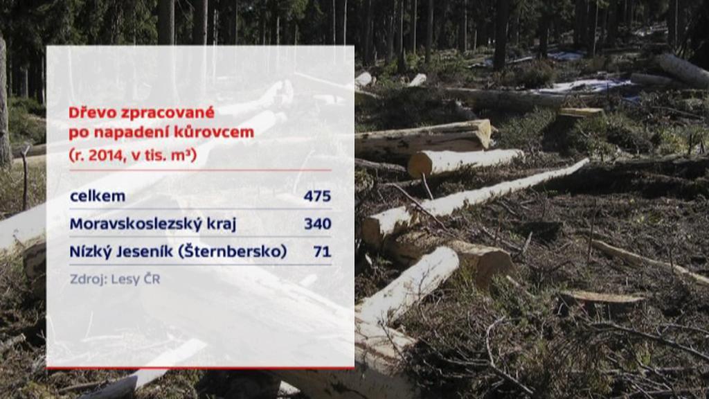 Dřevo zpracované po napadení kůrovcem