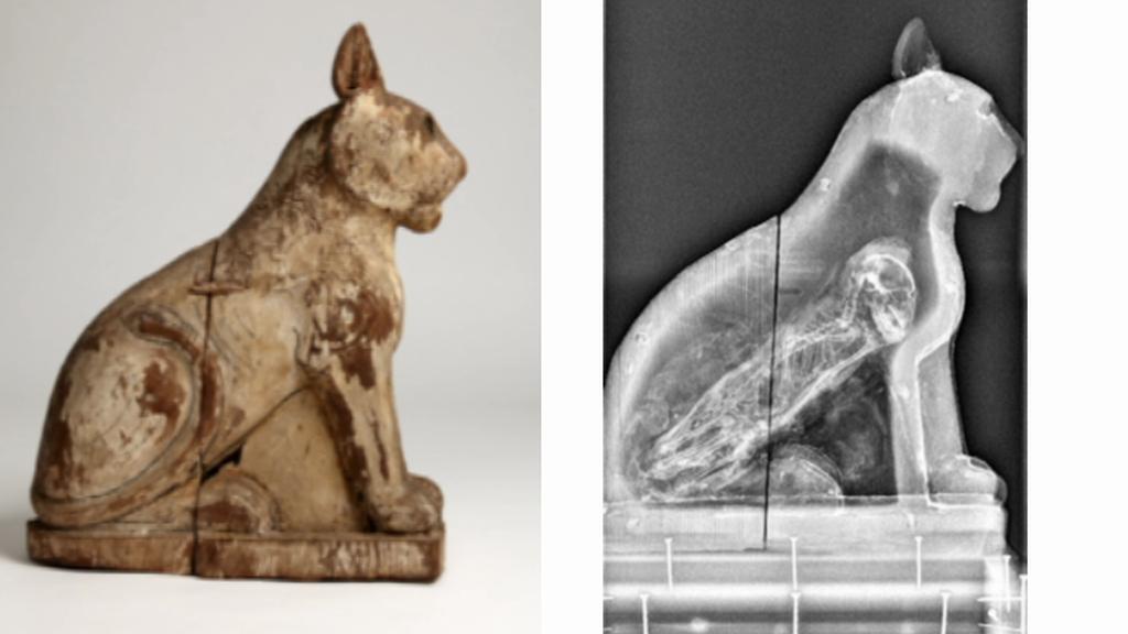 Podvržená mumie kočky