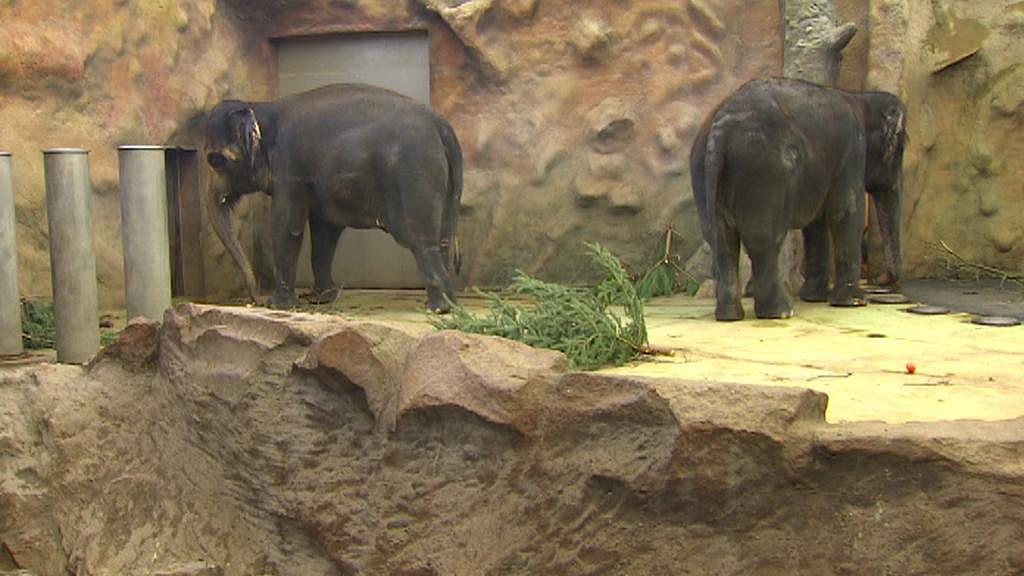 Ústecká zoo potřebuje nové pavilony