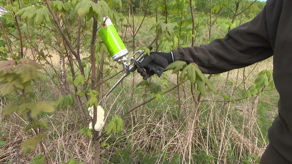 Může se umístit i na stromy, nejen na kůly