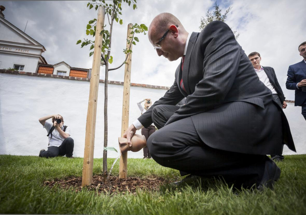 Bohuslav Sobotka při symbolickém zalévání lípy na zahradě Husova domku