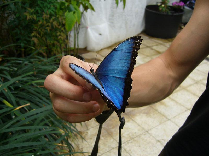 Motýli v arboretu Nový Dvůr u Opavy