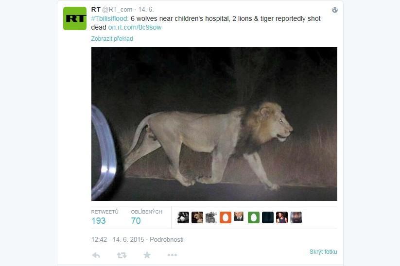 Lev uprchlý z gruzínské zoo