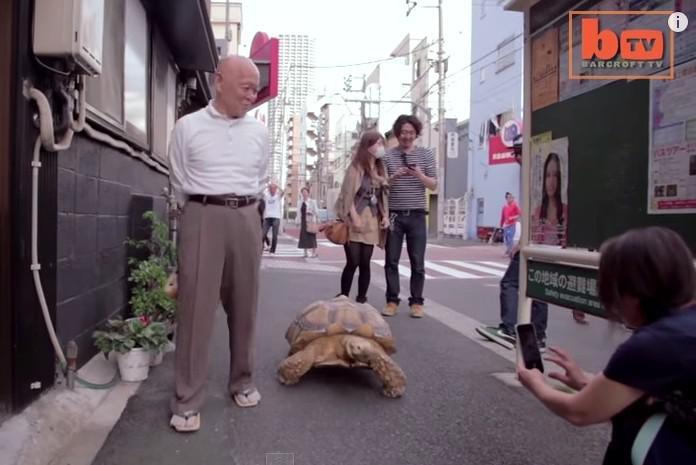 Japonec venčí želvu v Tokiu