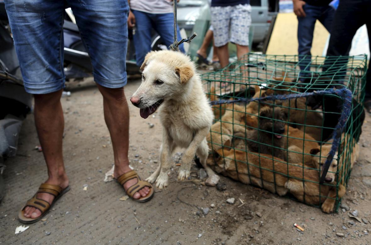 Čínský festival s psím masem