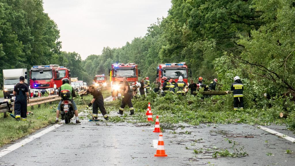Spadané stromy u polské vesnice Piasek