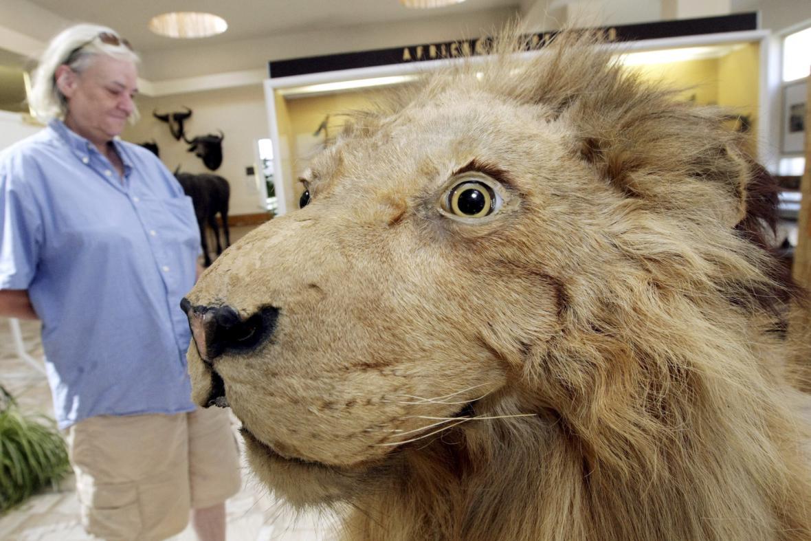Lev Karel v muzeu v Holicích