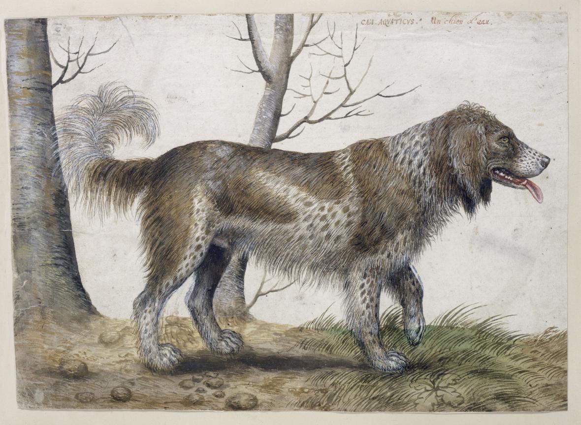 Hans Verhagen der Stomme / Vodní pes, 3. čtvrtina 16. st.