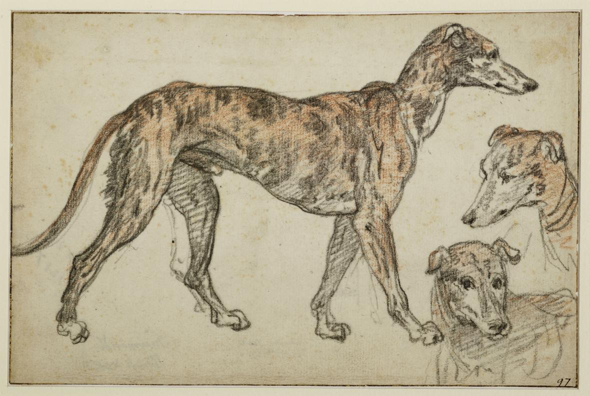 Federico Zuccari / Studie anglického chrta, kolem 1564-65