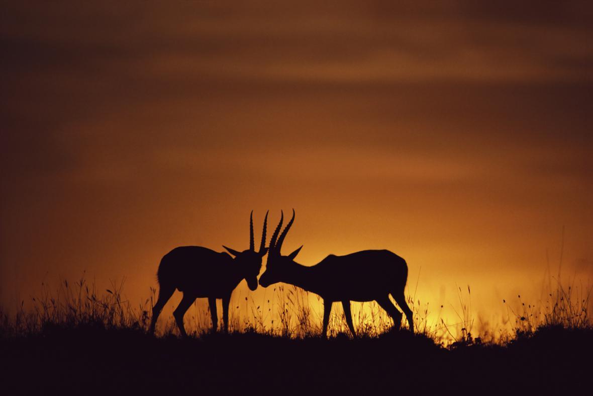 Keňská rezervace Masaj Mara