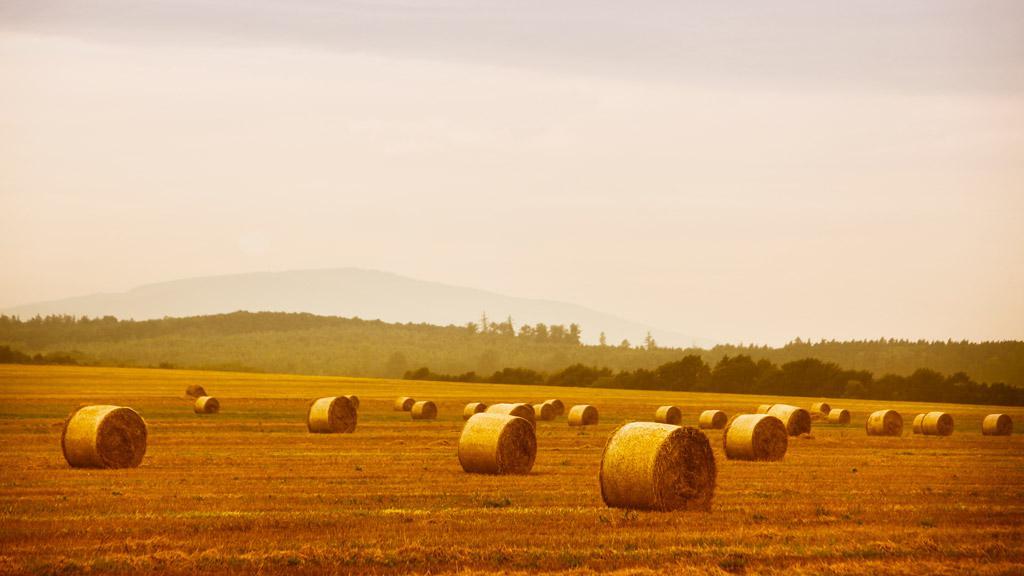Sklizeň obilí v jižních Čechách