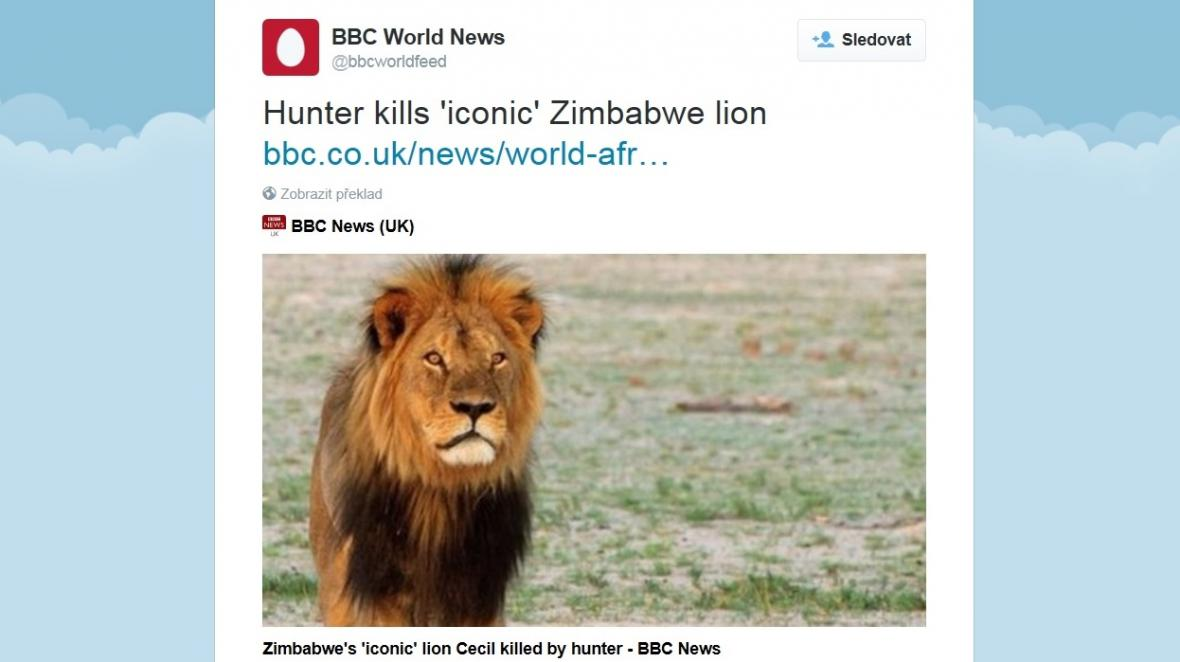 Tweet o zabití nejslavnějšího lva Afriky