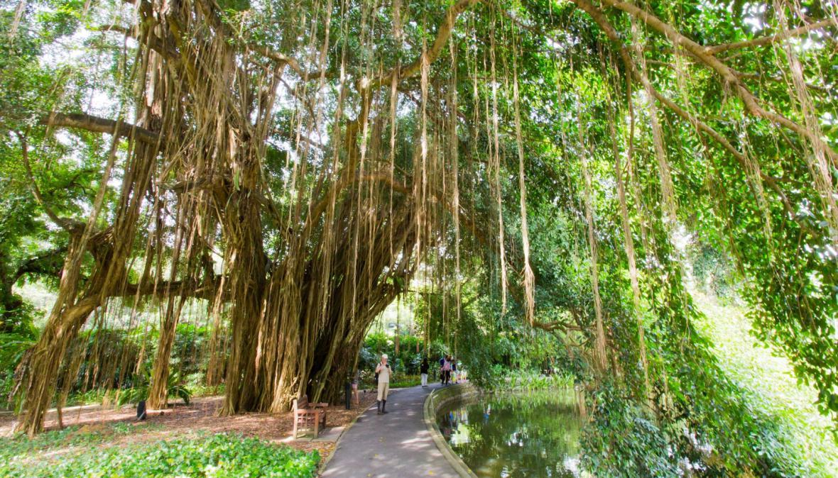 Singapurská botanická zahrada