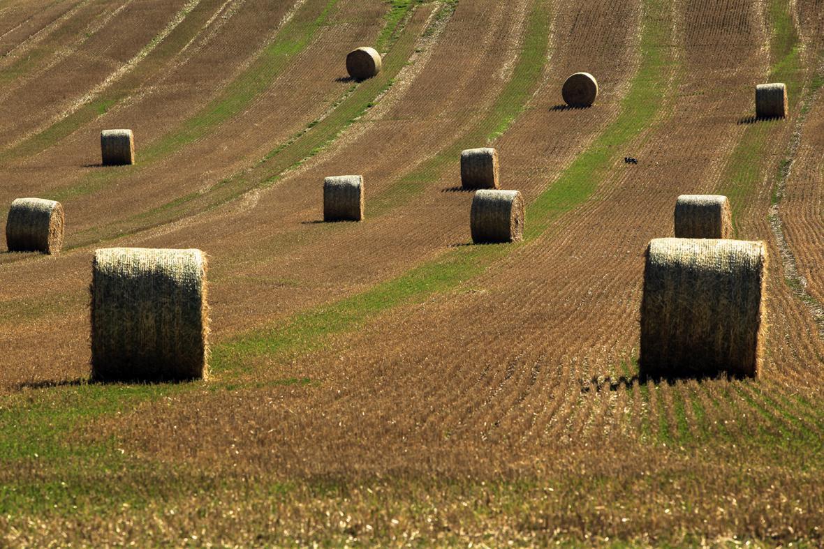 Extrémní sucho přineslo předčasný podzim
