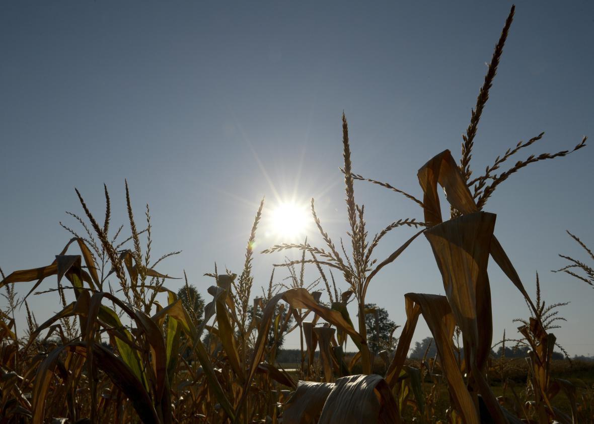 Rekordní sucho v Polsku
