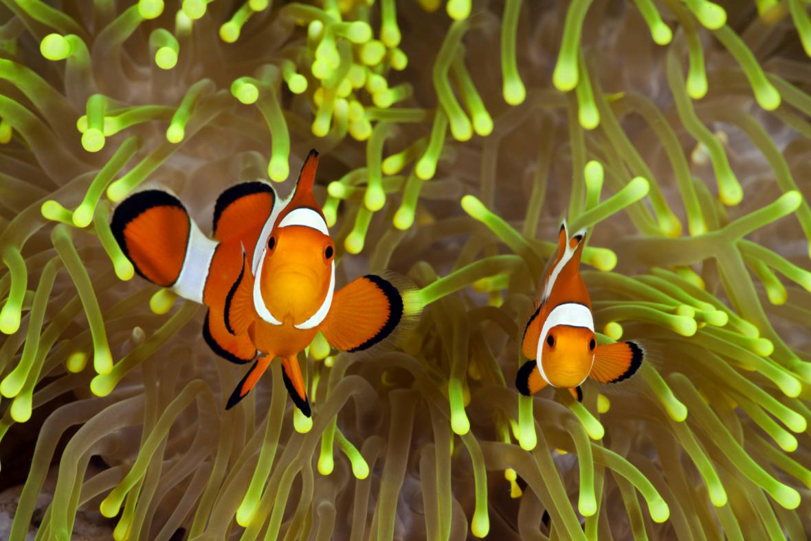 Mořská fauna