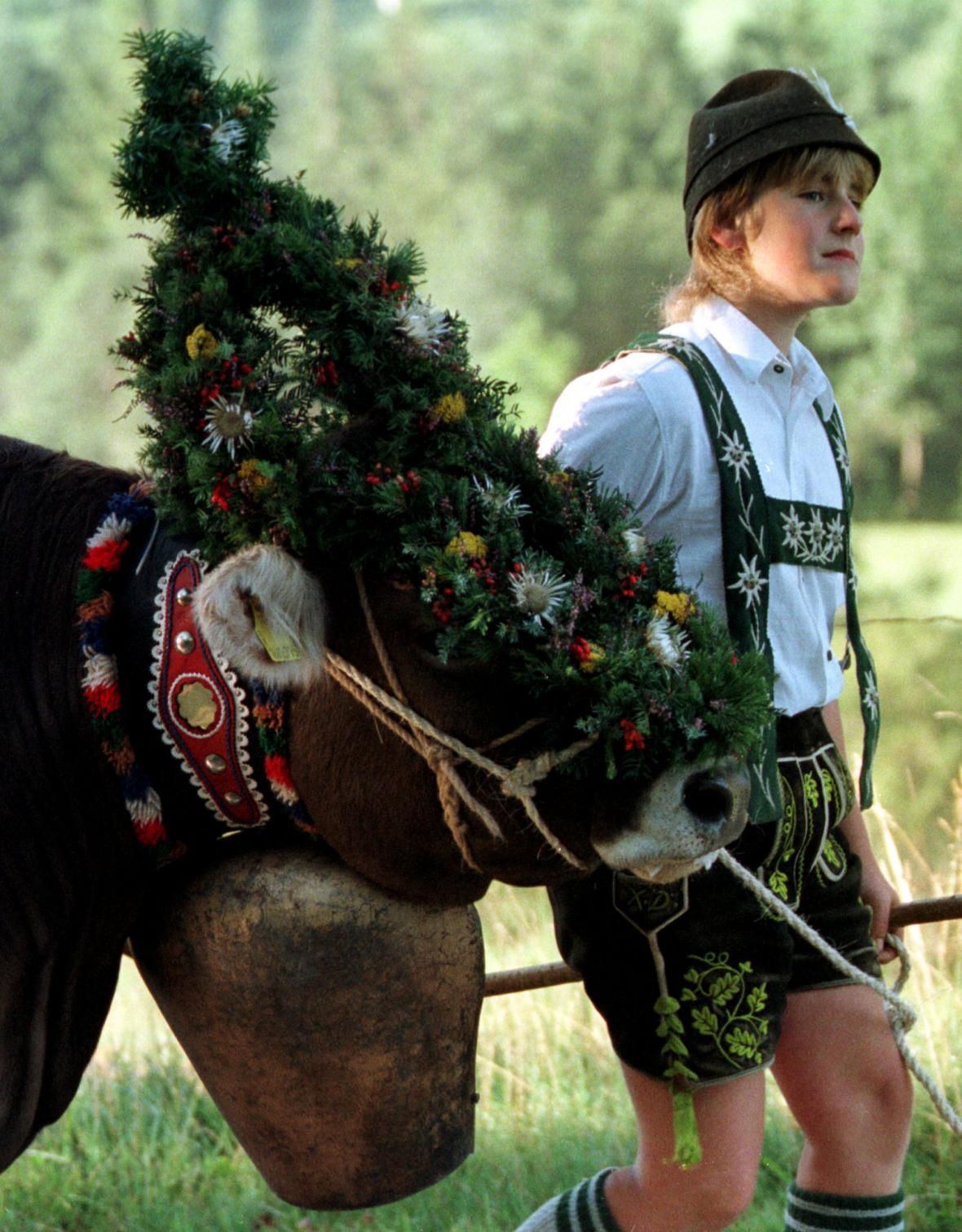 Bavorská kravka s tradiční květinovou ozdobou